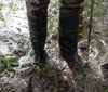 image of boots in Cascadia wetlands